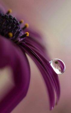 New flowers photography macro ideas