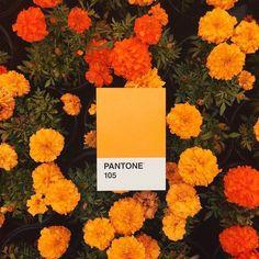 flowers, pantone, and orange image Rainbow Aesthetic, Orange Aesthetic, Aesthetic Colors, Aesthetic Pictures, Aesthetic Painting, Aesthetic Pastel, Aesthetic Collage, Aesthetic Grunge, Aesthetic Vintage