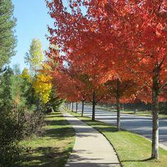 Fall has arrived in Eagle Ridge.