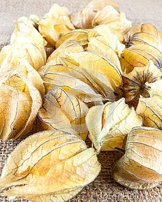 Group of ripe physalis fruit in their husks on a rustic, hessian background.