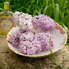 The lilacs are blooming...