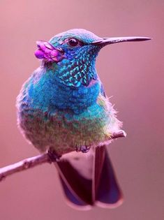 23 Super Ideas For Humming Bird Wings Mom All Birds, Cute Birds, Pretty Birds, Little Birds, Beautiful Birds, Animals Beautiful, Exotic Birds, Colorful Birds, Images Colibri