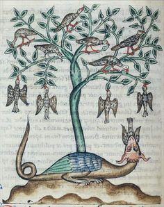 Doves are safe from the dragon in the peridexion tree. The dragon has caught an unwary bird. The doves hang from the tree in the way the barnacle goose is said to. Medieval Bestiary : Dove Gallery Bibliothèque Municipale de Douai, MS 711, Folio 38v