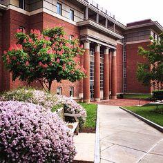 The Maxwell School