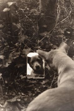 Joanna Pallaris Looking-glass Contemporary Photography, End Of The World, Four Legged, Dog Life, Old Photos, Puppy Love, Creative, This Is Us, Puppies