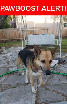 Is this your lost pet? Found in Round Rock, TX 78664. Please spread the word so we can find the owner!  German Shepherd mix  Nearest Address: Near Gattis School Rd & Windy Park Dr
