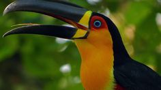tucan wallpaper - Buscar con Google