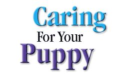 Caring for your Teacup, Toy and Tiny Toy Poodle Puppy - Free Poodle Care Information from Lil Poodles