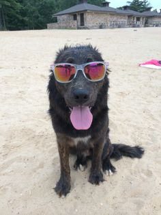 My son's dog loves to wear shades!