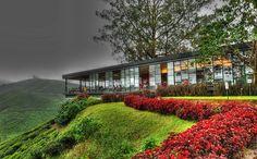 BOH Tea Plantation, Cameron Highlands, Malaysia.
