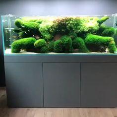 What a beautiful planted aquarium! —-Video from Big ole moss! What a beautiful planted aquarium! Aquarium Ornaments, Aquarium Decorations, Aquarium Ideas, Tropical Fish Aquarium, Planted Aquarium, Aquarium Aquascape, Tree Stump Decor, Cool Fish Tanks, Perth