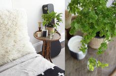 bedside maidenhair fern | gardenista - low light