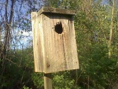 Old birdhouse in the meadow
