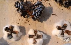 How to Make Cute Cotton Stems from Pine Cones