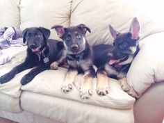 This comfy couch trio. | 19 Puppy Best Friends Because The World Doesn't Completely Suck