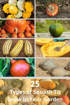 Squash can be a great thing to grow. Whether you want to grow summer squash or winter squash, here are 25 different types to try growing. Types Of Squash Summer, Different Squash Types, Winter Squash Varieties, Yellow Summer Squash, Growing Squash, Growing Zucchini, Yellow Vegetables, Types Of Vegetables, Veggies