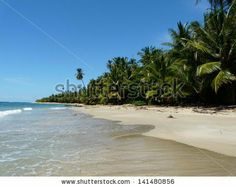Coconuts trees on the beach,Caribbean, Punta Uva, Costa Rica - stock photo