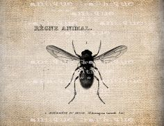 Antique Illustration Insect Bee  Digital Download for Papercrafts, Transfer, Pillows, etc Burlap No. 1509