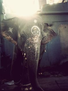 Laxmi the Elephant, Ganesh Temple, Pondicherry.