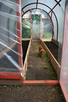 How to make your own polytunnel – Gardening & Permaculture Design Diy Greenhouse Plans, Cheap Greenhouse, Greenhouse Interiors, Build A Greenhouse, Indoor Greenhouse, Greenhouse Gardening, Portable Greenhouse, Texas Gardening, Potager Garden