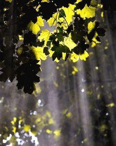 Illuminated tree....Walk in the light,Be the light