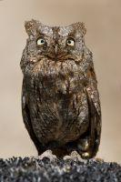 Mini Owl by thrumyeye