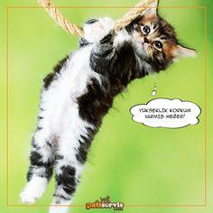 Kediler, evin yüksek yerlerine tırmanmaya ve sizi oradan seyretmeye bayılırlar. Yaramaz dostlarınızı mutlu edecek tırmanma ve oyun evleri burada: goo.gl/dnNu1j