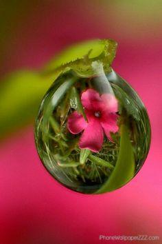 reflection of flowers in dew drops Water Photography, Creative Photography, Amazing Photography, Levitation Photography, Exposure Photography, Image Zen, Fotografia Macro, Dew Drops, Rain Drops
