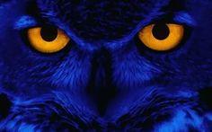Blue Owl Wallpaper.