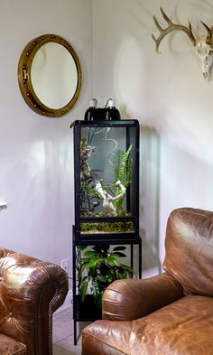 Make a beautiful focal point in your room with Zoo Med's ReptiBreeze and ReptiBreeze Stand. Perfect for Chameleons, Crested Geckos, and other arboreal lizards.