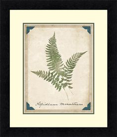 Vintage Ferns X Framed Graphic Art