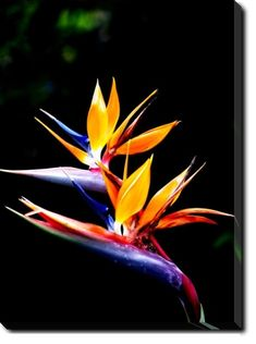 Bird of Paradise Flower kinda want to try this out in zone 8!