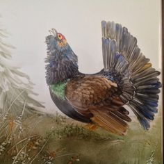 Gallo cedrone dipinto a olio molle AnnaMaria Mattedi