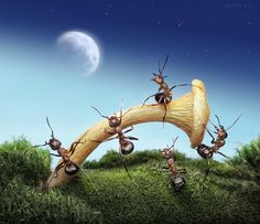 Amazing Macro Photography of Ants from Andrey Pavlov.