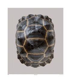 TROWBRIDGE - Tortoise III