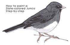 painting juncos- lots of good stuff on this site.