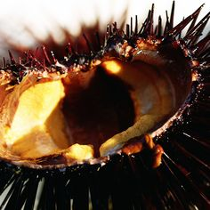 In our new series Hunter and Gatherer, MUNCHIES joins Stephanie Mutz, a Santa Barbara sea urchin diver as she dives deep for California gold.