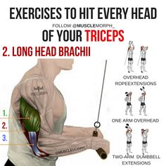 triceps tricep workout triceps exercise lateral tricep long head triceps medial triceps musclemorph target all heads of triceps