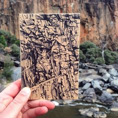 "Annika Romeyn field studies: ""Glad to have braved the windy weather for a lovely morning drawing at Red Rocks Gorge in Canberra with the crew from @megaloprintstudio Bonsai and Print…"""