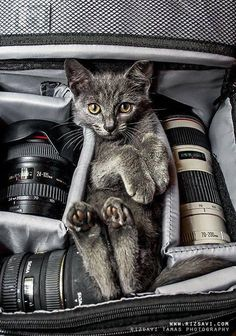 a Cat Photographer!