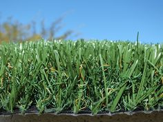 Verde Rico 80 grass sample!!