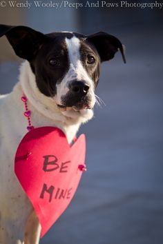 Looking for Love at the Lexington Humane Society