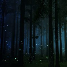 Firefly Forest, United Kingdom