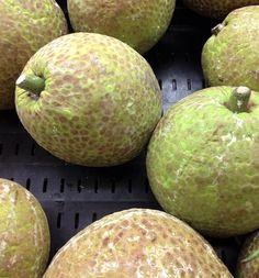 Breadfruit - Pana