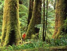 Vancouver Island - Clayoquot Sound