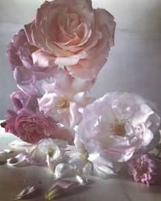 New Inspiration from Nick Knight's Heavenly Roses | http://www.pithandvigor.com/?p=53577