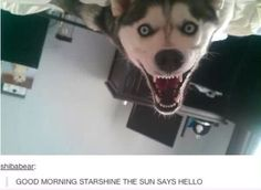 The funniest yet scariest pic I have seen