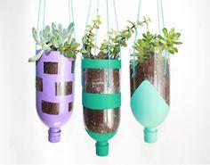 DIY jardin bouteille plantes