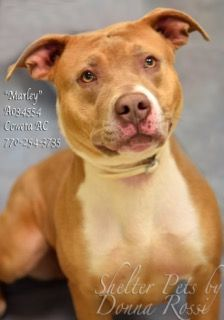 ❤6•2•17 SL❤ MY NAME IS MARLEY! PLEASE LET ME BE YOUR GOOD BOY!  Dogs for adoption,euthanization,rescue,sponsor