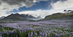 Photo Svinafell, Iceland par Viggo Johansen on 500px